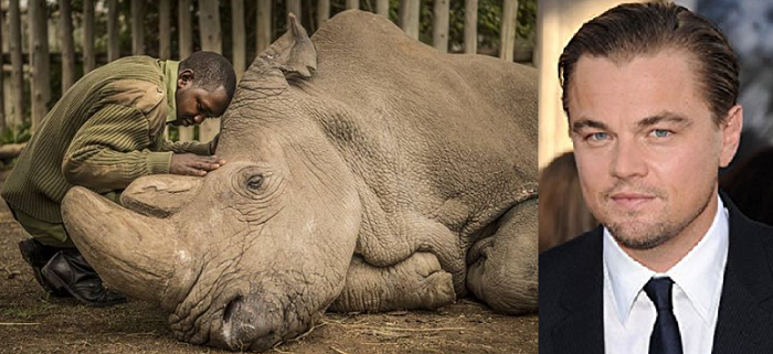 Leonardo DiCaprio; RIP Sudan, the Last white northern Rhino has gone into the stars!!