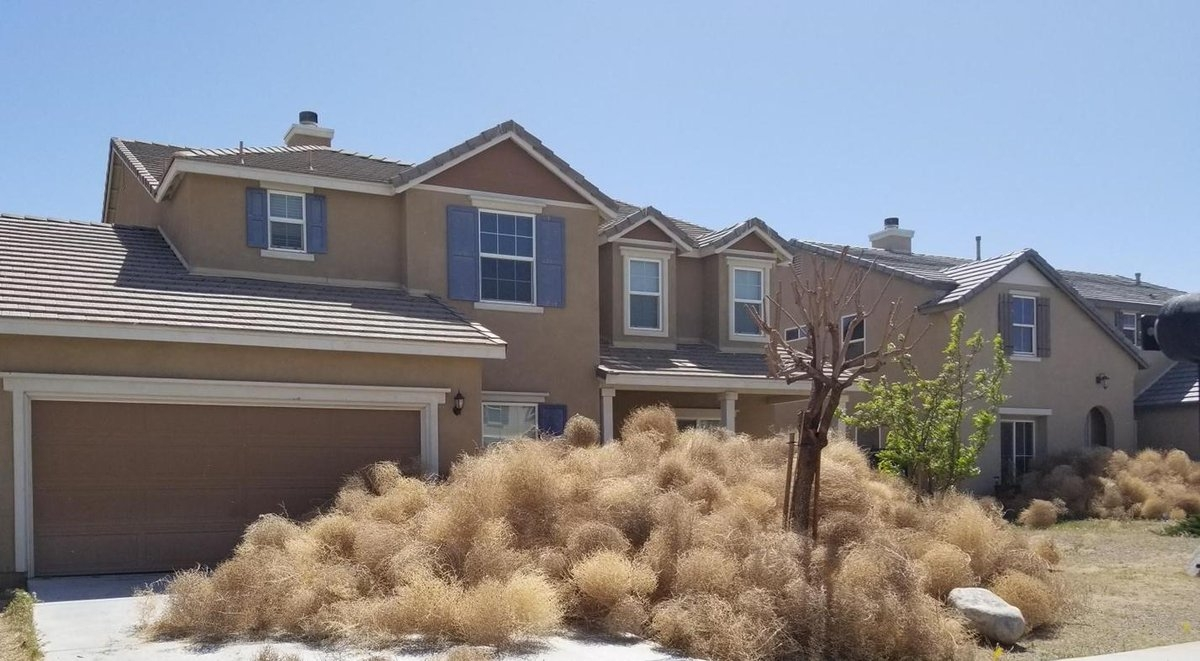 Tumbleweed invasion in Victorville, residents call for help