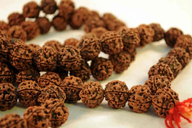 Rudraksha, a benefactor of good health and mind