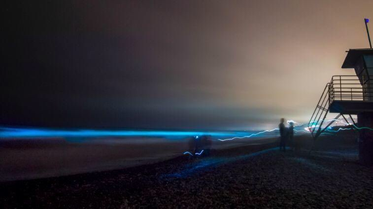 Bioluminescence lighting up the San Diego waters again, coastline are lighting up neon blue