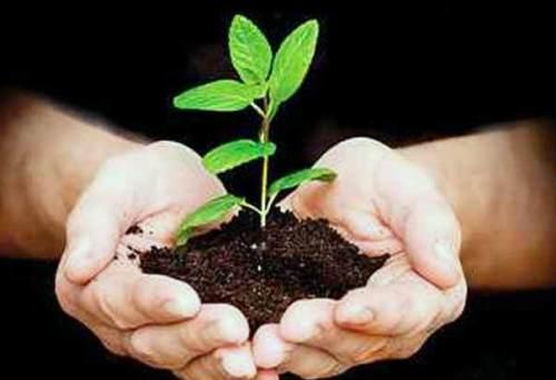 राशि के अनुसार लगाएं पौधे, जीवन में आएगी सकारात्मकता