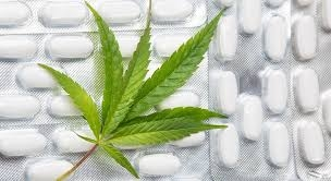 Marijuana based medical products could be safe to treat multiple sclerosis patients