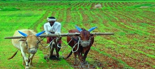 पिछले वित्तीय वर्ष में बैंकों की कृषि ऋण वृद्धि दर में आई जोरदार 'गिरावट'