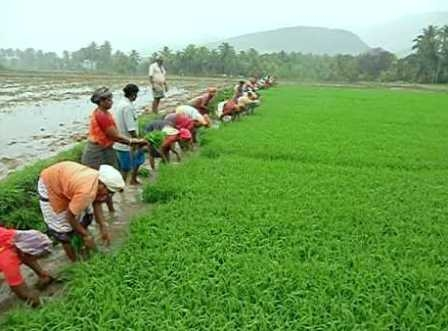 Relief for farmers: Weather department announces normal monsoon this year