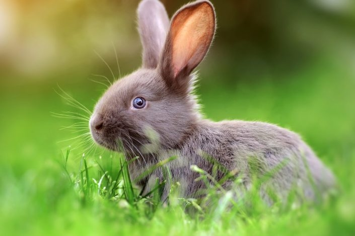 Rabbits and parrots can see behind without moving their heads!
