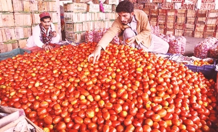 पाकिस्तान में 300 रुपये किलो तक पहुंचे टमाटर के दाम