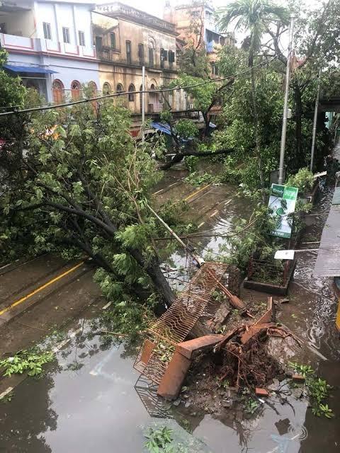 Kolkata gets poorer by 10,000 trees
