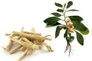 Ashwagandha: Boon For Neurodegenerative Conditions