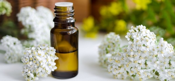 Soothing yarrow oil for all