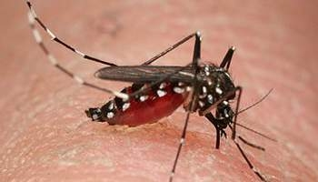 Compound that prevents spread of Zika identified