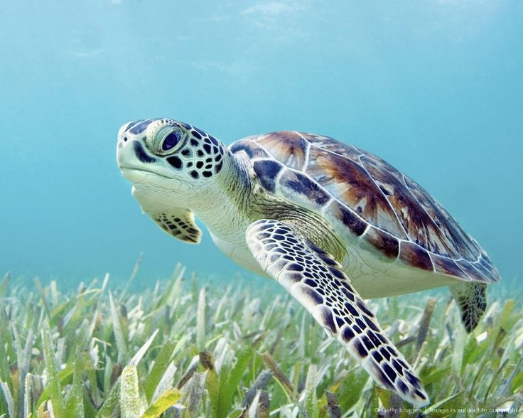 50 sea turtles released ahead of Endangered Species Day