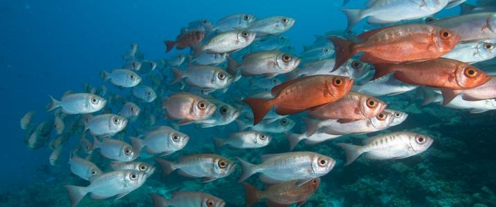 Marine reserves may mitigate climate change impact