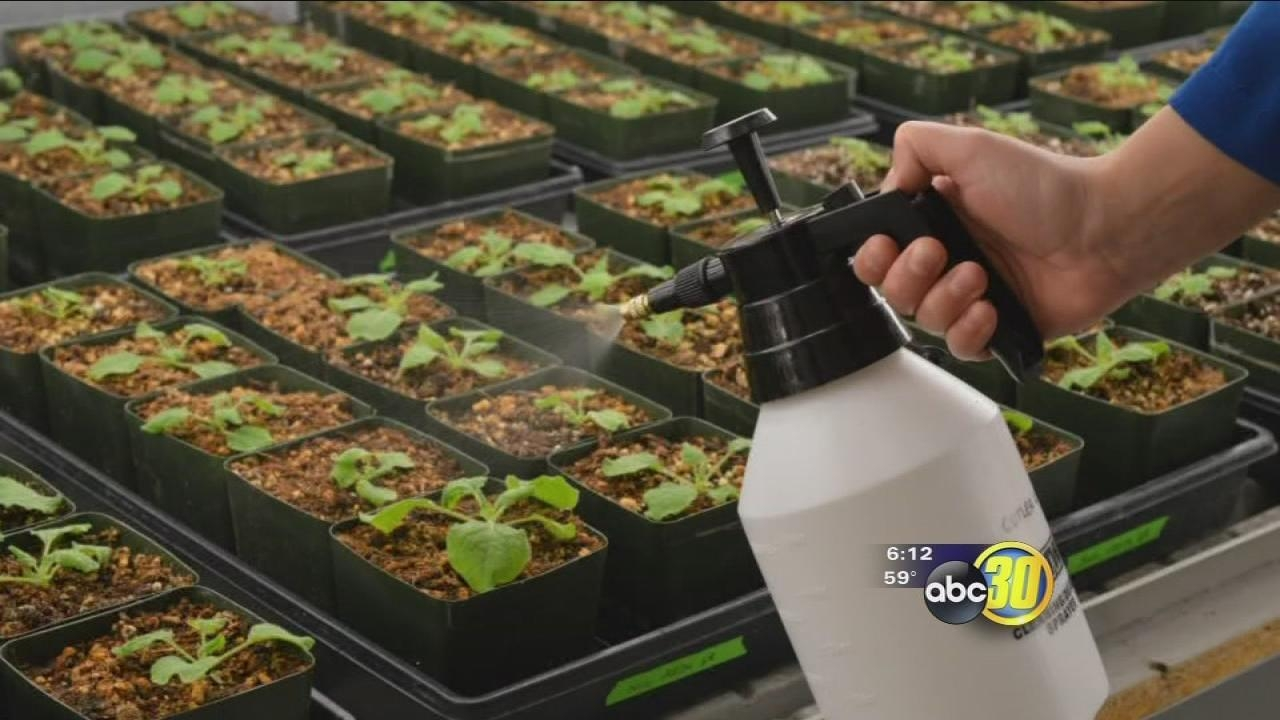 Breakthrough made in drought-resistant crops development