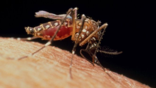 Why eradication of mosquitoes is not the best idea