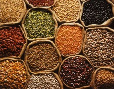 Three Lakh M.T. Pulses Crops Purchased on MSP from 1.53 Lakh Farmers