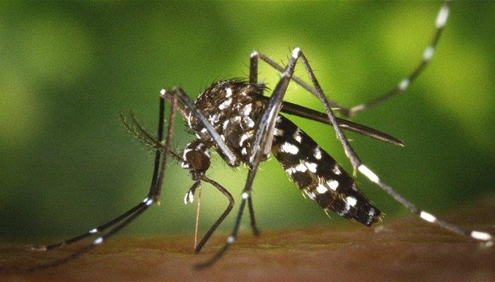 Two new cases of mosquito-borne chikungunya virus near Rome testo