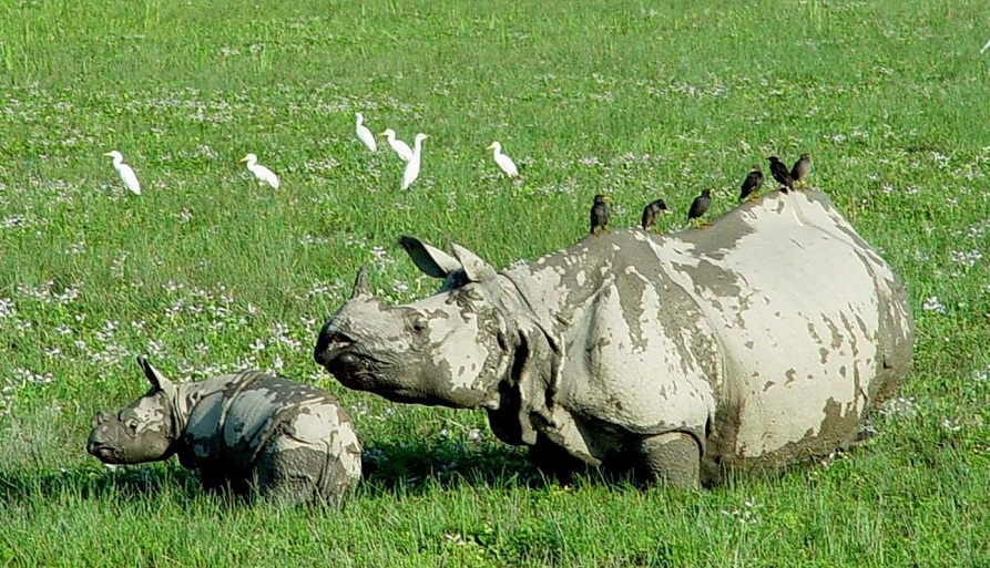 Jaldapara, an abode of the one-horned rhino