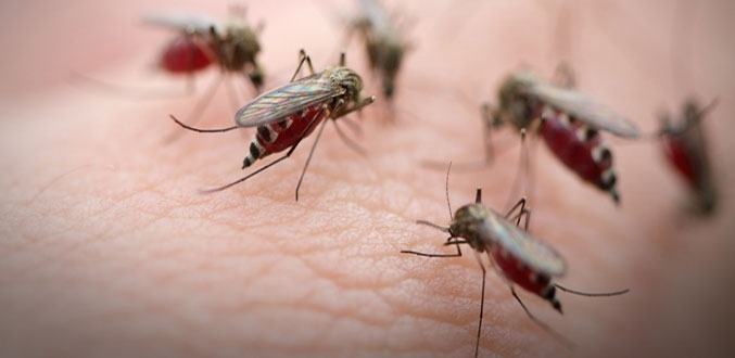 31 dead, over 14,500 dengue cases reported in Bengal